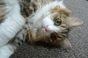 しっぽの動きで猫の気持ち_01