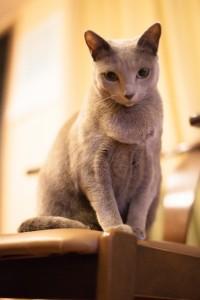 猫の種類は?性格まるわかりチェック_01