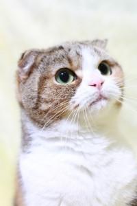 鳴き声で分かる猫の気持ち_03