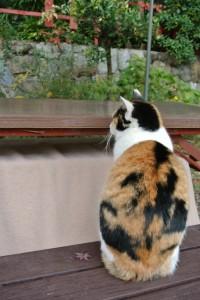 鳴き声で分かる猫の気持ち_01