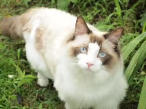 猫の種類は?性格まるわかりチェック_04