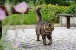 しっぽの動きで猫の気持ちがわかる?!_03