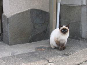 猫の種類は?性格まるわかりチェック_03