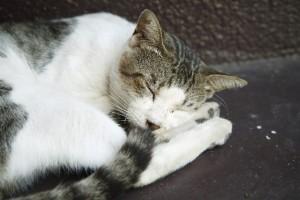 しっぽの動きで猫の気持ちがわかる?!_05