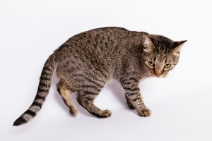 しっぽの動きで猫の気持ちがわかる?!_04