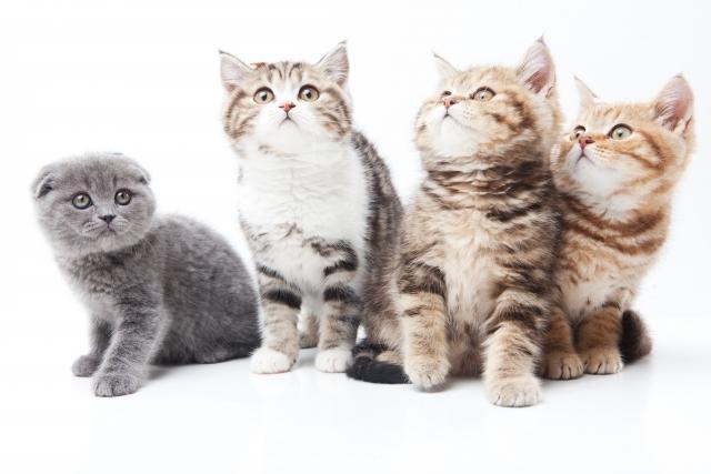 猫 の 種類 おとなしい 猫の種類は?人気ランキングトップ30と性格、値段まとめ